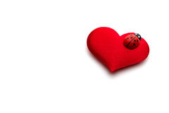 Hearts and ladybug for valentines day Stock Image