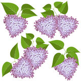 Hearts of lilac flowers set Royalty Free Stock Photography