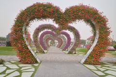 Miracle Garden in Dubai. The Dubai miracle garden showcases a wide variety of different flowers that are arranged in different shapes. The blooms of these stock photo