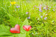 Hearts for nature stock photography