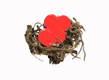 Hearts in nest. Two hearts lying in a nest stock photography