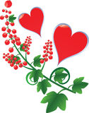Hearts with red currant Stock Photography