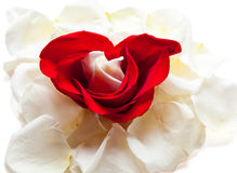 Hearts and roses Stock Photography