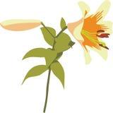 heartsease 02 цветков иллюстрация штока