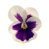 Heartsease Stock Images