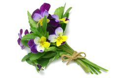 Heartsease Foto de Stock