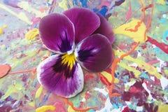 Heartsease pourpre sur un fond pittoresque avec la peinture de jet Photographie stock