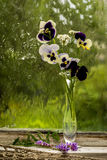 Heartsease. (Viola tricolor) fine flowers bouquet in a window sill in a sunny rainy day Royalty Free Stock Photo