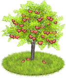 Heartshaped Äpfel in einem Apfelbaum Stockfoto