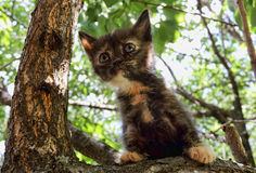 Heartwarming tricolor kitten Royalty Free Stock Image
