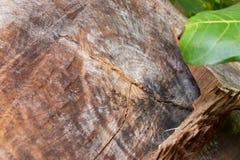 Heartwood im Wald Lizenzfreie Stockfotografie