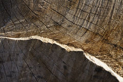 Heartwood texture background Royalty Free Stock Photo