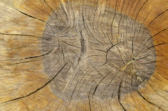 Heartwood texture background. Stock Photo