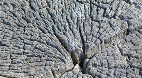 Heartwoodbaum ist am ältesten Stockbilder