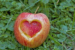 Hearty apple Royalty Free Stock Image