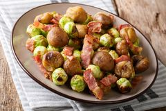 Hearty salad of chestnuts, Brussels sprouts and bacon close-up. Royalty Free Stock Photo