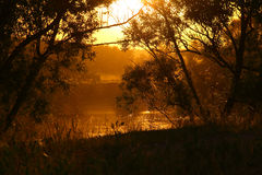 Heat. Landscape with willows at pond, down in the air and the orange haze Stock Image