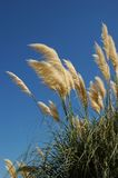 Heat. Summer plants in a blue sky Royalty Free Stock Photo