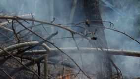 Heat ash and smoke from bonfire. Heat accumulated with global warming. Or we are the cause of this problem stock footage