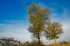 The heat of autumn colors. The autumn colors typical of the Piedmonte langhe in October Stock Images