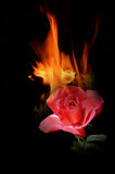Heat from beautiful red rose. On black background Stock Image