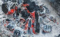 Heat from burnt wood logs in the campfire on a picnic. Heat from burnt wood logs in the campfire after cooking a food on a picnic Royalty Free Stock Image