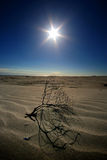 The Heat In The Desert Dunes Royalty Free Stock Images