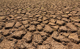 Heat , drought parched ground . Heat , drought parched ground on dry river Stock Image