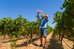 Heat exhausted young farmer cooling himself in Royalty Free Stock Images