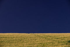 Heat field under a blue sky. Stock Photography