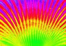 Heat map seashell to multi colored artform Royalty Free Stock Photography