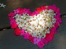 Heat shape tung flower Royalty Free Stock Photos