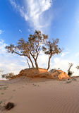 Heat, the trees in a desert Stock Photography
