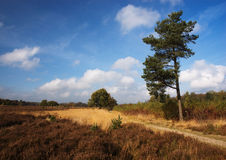 Heath. View on the heath on a sunny autumn day stock photos