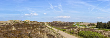 Heath and dunes landscape at North Sea island Sylt stock images