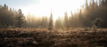 Heath and forest shrouded in mist. Heath (or scrub) and beyond it a forest covered in mist or fog but lit by weak sunlight stock image