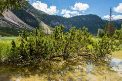 Heath growing from a lake. Heath growing from mountain lake Royalty Free Stock Image