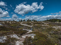 Heath habitat on Little Moose Island. Wide open spaces on the heath on Little Moose Island, Schoodic Peninsula, Acadia National Park Royalty Free Stock Images
