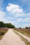 Heath in landscape Stock Photos