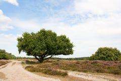 Heath in landscape Royalty Free Stock Photos