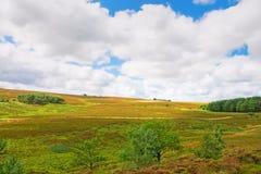 Heath landscape Royalty Free Stock Images