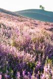 Heath Landscape royaltyfri fotografi