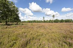 Kyritz-Ruppiner Heide landscape in Germany Royalty Free Stock Photo