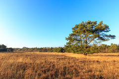 Heath landscape in evening glow in Holland Royalty Free Stock Image
