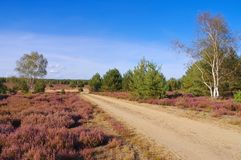 Heath landscape with flowering Heather and path. Heath landscape with flowering Heather, Calluna vulgaris and hiking path stock image