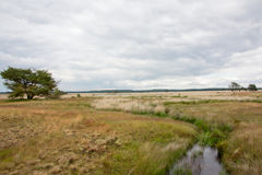 Heath landscape at Hoge Veluwe, Netherlands Stock Image