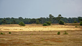 Heath landscape with sand and trees at Hoge Veluwe, Netherlands Royalty Free Stock Photos