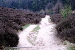 Heath and path at the Posbank in Rheden, National park Veluwe, N Royalty Free Stock Photo