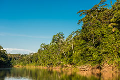 Heath river peruvian Amazon jungle Madre de Dios Peru Royalty Free Stock Photo