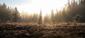 Heath und Wald eingehüllt in Nebel stockbild